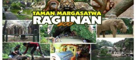 Wisata Murah Kebun Binatang Ragunan